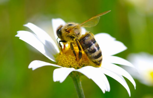 5 Awesome Things You Never Knew About Bees
