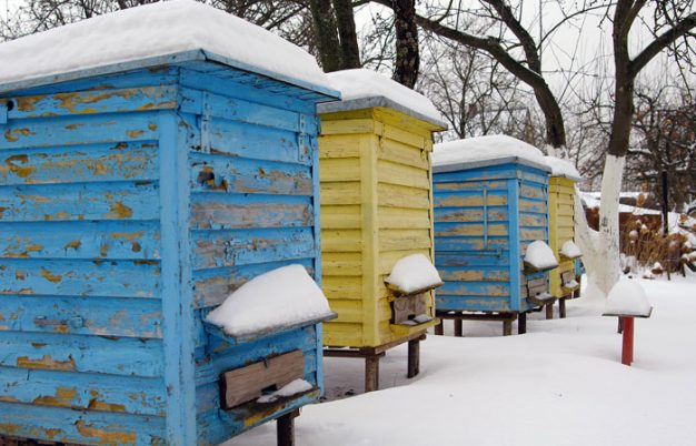 What Happens To Bees In The Winter?