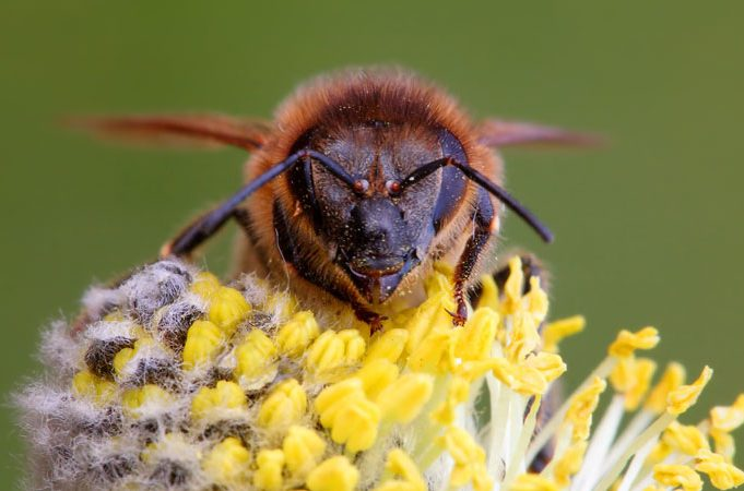 Can You Identify These Different Types of Bees?